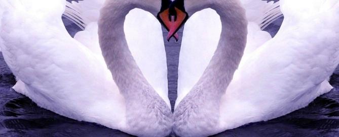 love luiged