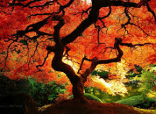 Holistiline treening