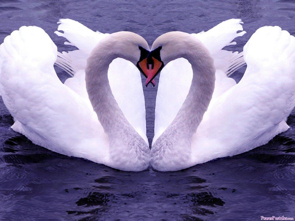 Kui jaht käib armastusele