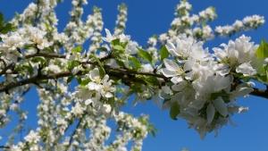 Kevadine maagiapäev