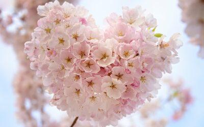 Жить в гармонии с сердцем – это не лозунг, это образ жизни